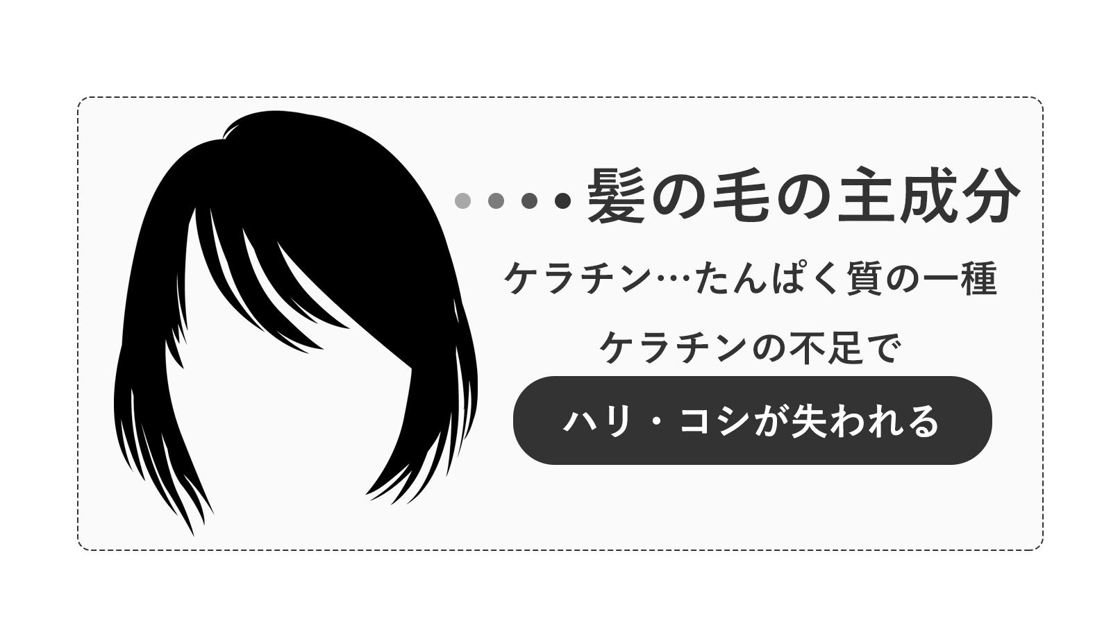 髪の毛の主成分は「ケラチン」というたんぱく質。ケラチン不足は髪のハリやコシに影響する。